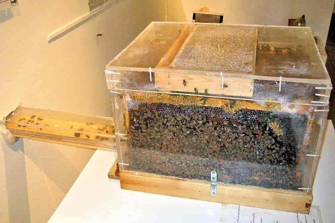 transparent hive at bee museum